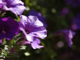 Kvety 3